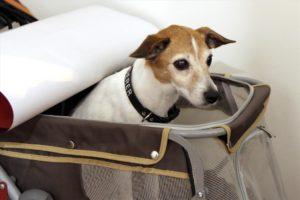 Auch die Jack-Russell-Terrier-Dame Spidey, die im Film eine wichtige Rolle spielt, durfte bei der Premierenfeier mit dabei sein. (Foto: Björn Othlinghaus)